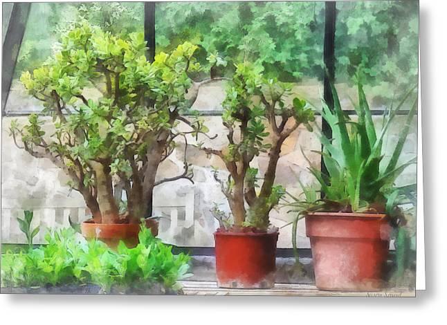 Flowerpot Greeting Cards - Bonsai in Greenhouse Greeting Card by Susan Savad