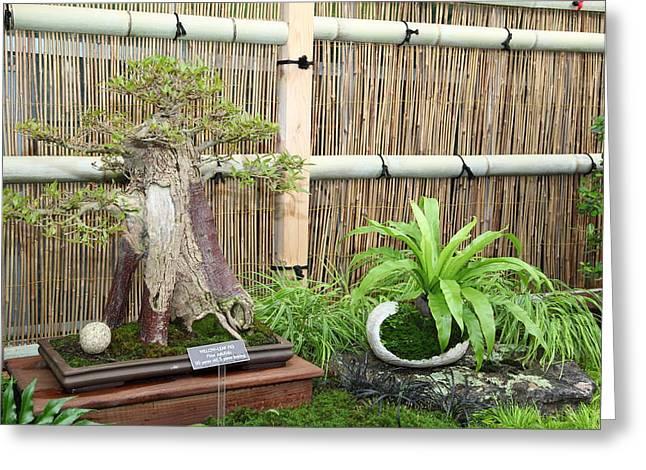 Mini Greeting Cards - Bonsai Treet - US Botanic Garden - 01132 Greeting Card by DC Photographer