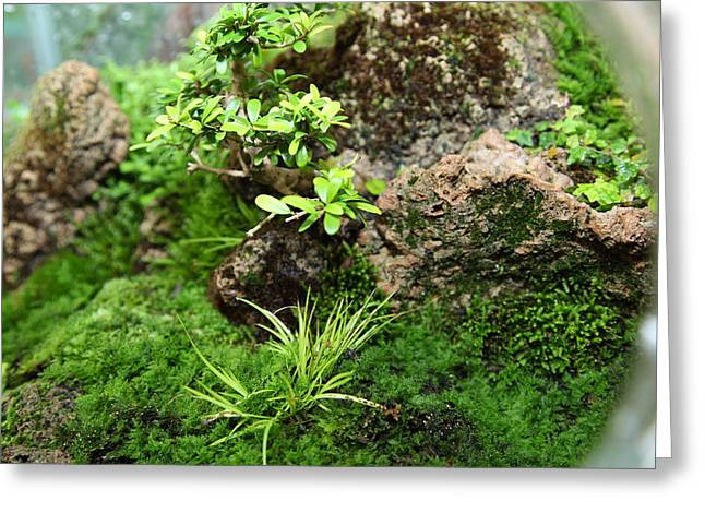 Miniature Photographs Greeting Cards - Bonsai Treet - US Botanic Garden - 01134 Greeting Card by DC Photographer
