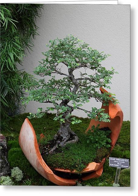 Mini Greeting Cards - Bonsai Treet - US Botanic Garden - 01138 Greeting Card by DC Photographer
