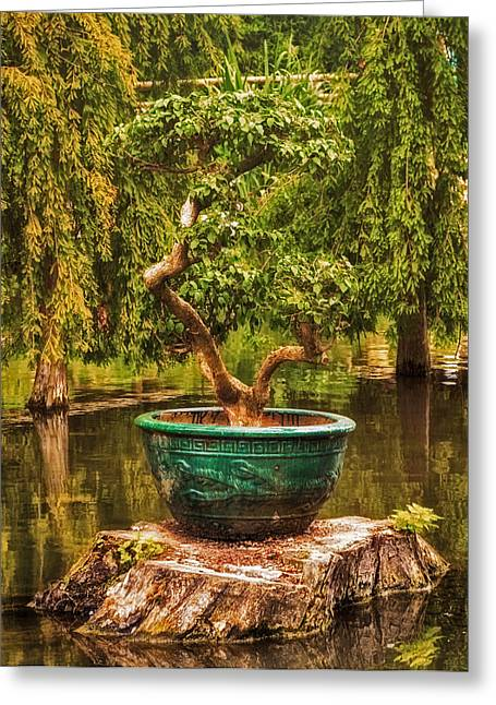 Picturesque Greeting Cards - Bonsai Greeting Card by Wim Lanclus