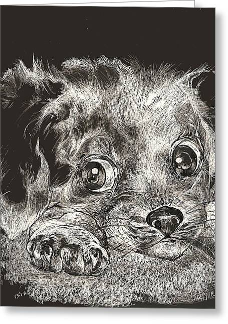 Puppies Drawings Greeting Cards - Boo Too Greeting Card by Robert Tiritilli