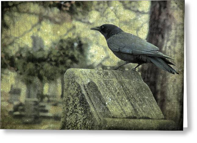American Crow Greeting Cards - Book Of Wisdom Greeting Card by Gothicolors Donna Snyder
