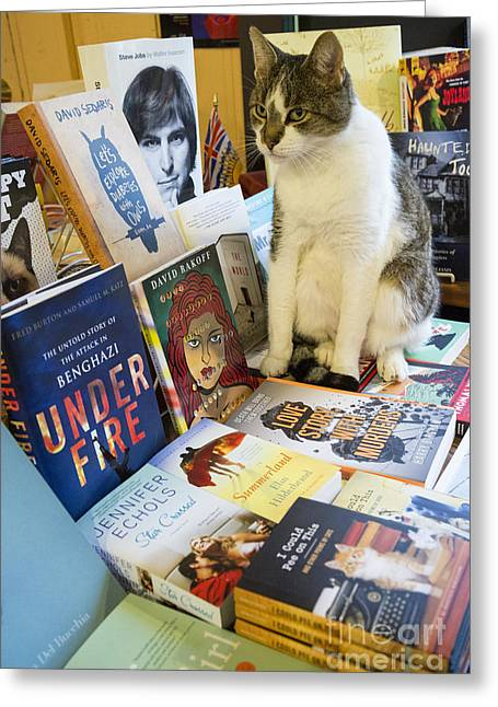 Bookish Greeting Cards - Bookish Cat Greeting Card by Michael Wheatley