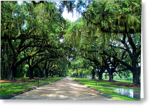 Boone Hall Greeting Cards - Boone Hall Oak Allee Greeting Card by Randall Weidner