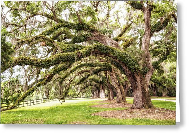 Mt. Pleasant Sc Greeting Cards - Boones Oaks Greeting Card by Karol  Livote