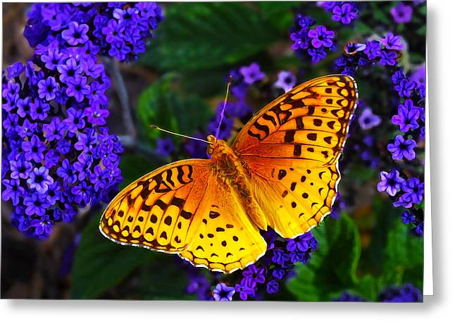 Maine Spring Greeting Cards - Boothbay Butterfly Greeting Card by Bill Caldwell -        ABeautifulSky Photography