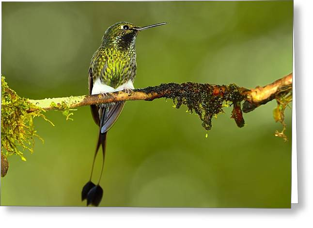 Moss Green Greeting Cards - Bootstraps Greeting Card by Tony Beck