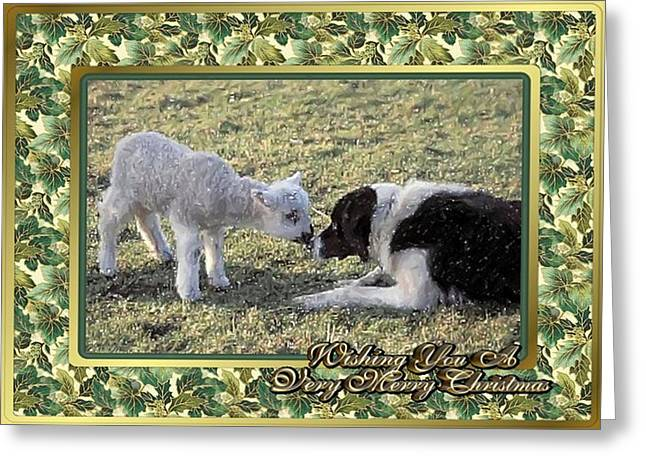Border Pastels Greeting Cards - Border Collie And Lamb Christmas Greeting Card by Olde Time  Mercantile
