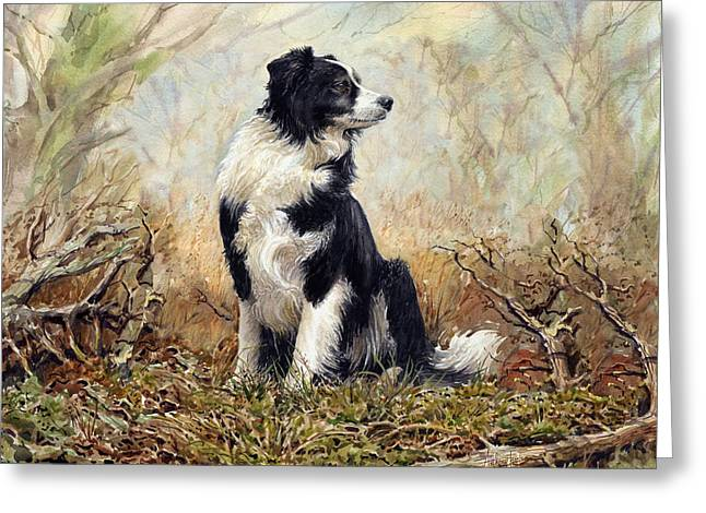 Working Dog Greeting Cards - Border Collie Greeting Card by Anthony Forster