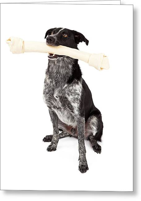 Rawhide Greeting Cards - Border Collie Carrying Bone Greeting Card by Susan  Schmitz