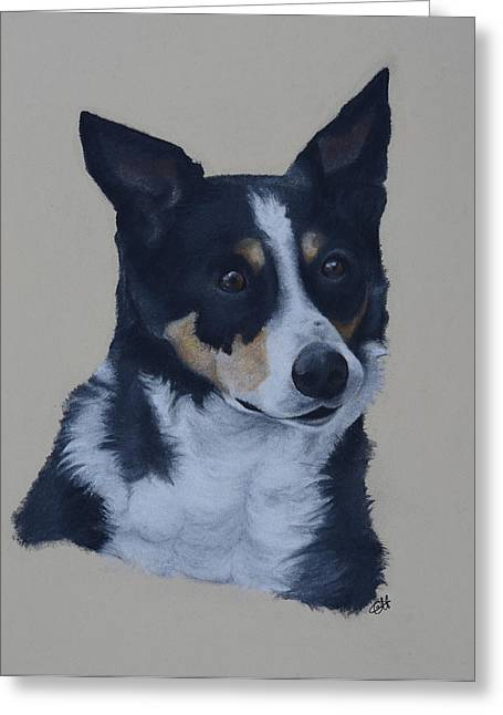 Border Pastels Greeting Cards - Border Collie Greeting Card by Catt Kyriacou