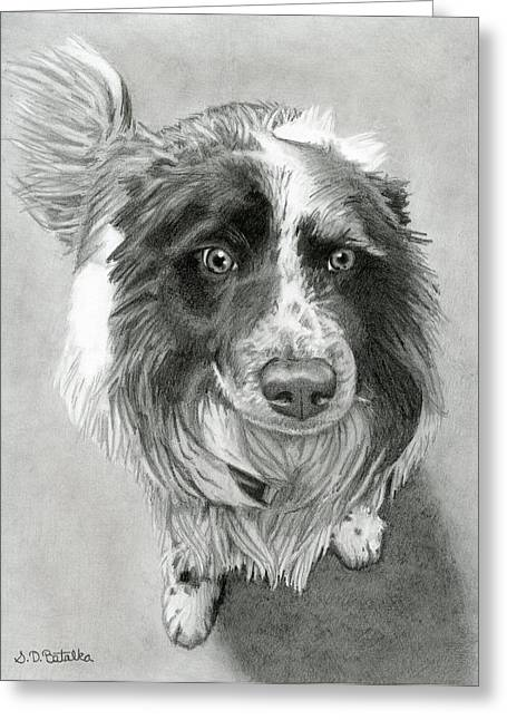 Puppies Drawings Greeting Cards - Border Collie Greeting Card by Sarah Batalka