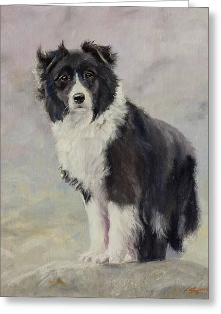 Collie Greeting Cards - Border Collie portrait III Greeting Card by John Silver
