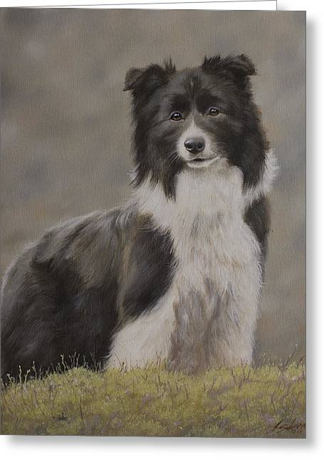 Border Greeting Cards - Border Collie portrait VIII Greeting Card by John Silver