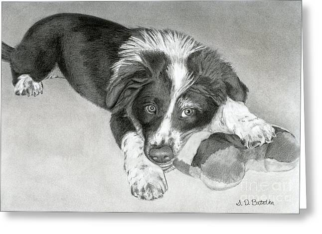 Toy Dog Drawings Greeting Cards - Border Collie Puppy Greeting Card by Sarah Batalka