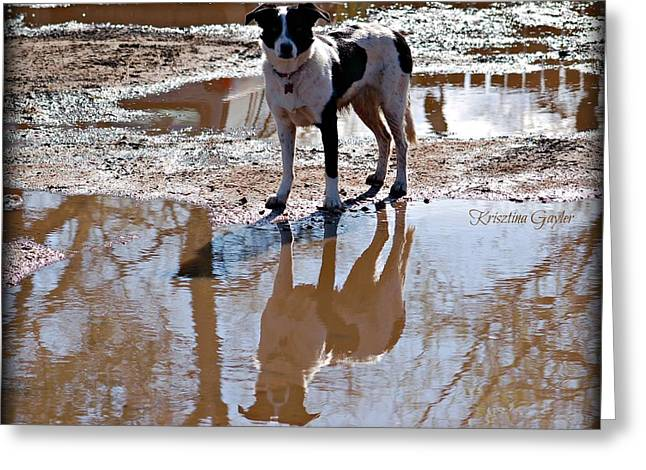 Collie Pyrography Greeting Cards - Border Collie Reflection Greeting Card by Krisztina  Gayler