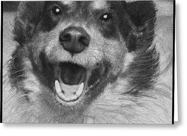 Border Collies Rule Greeting Card by Doris Rowe