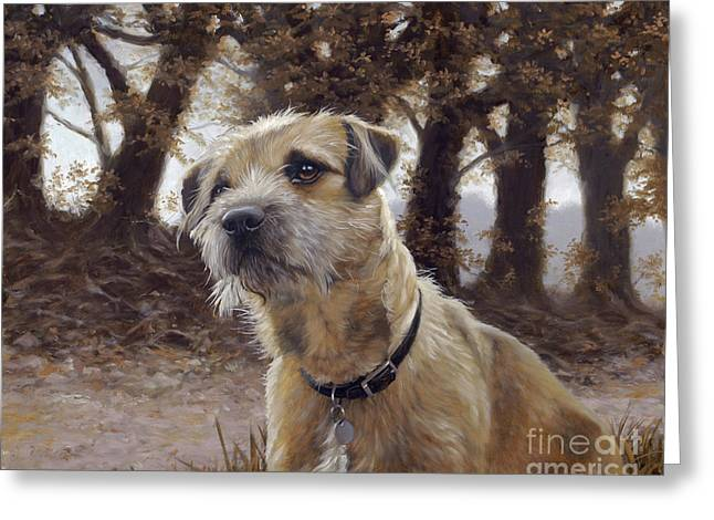 Border Terrier in the woods Greeting Card by John Silver
