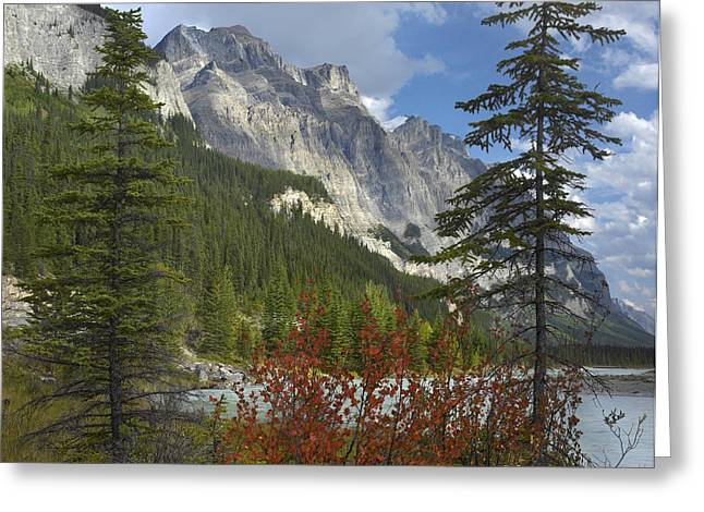 Mount Wilson Greeting Cards - Boreal Forest And Mount Wilson Banff Greeting Card by Tim Fitzharris