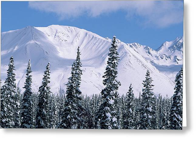 Boreal Forest And The Talkeetna Mts Greeting Card by