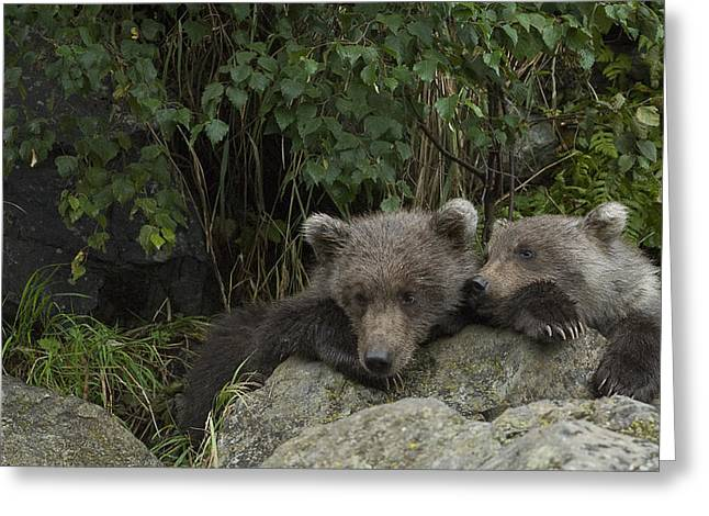 Twosome Greeting Cards - Bored Grizzly pubs Greeting Card by Andy-Kim Moeller