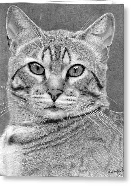 Bengal Drawings Greeting Cards - Boris my bengal cat Greeting Card by Alexandra Riley