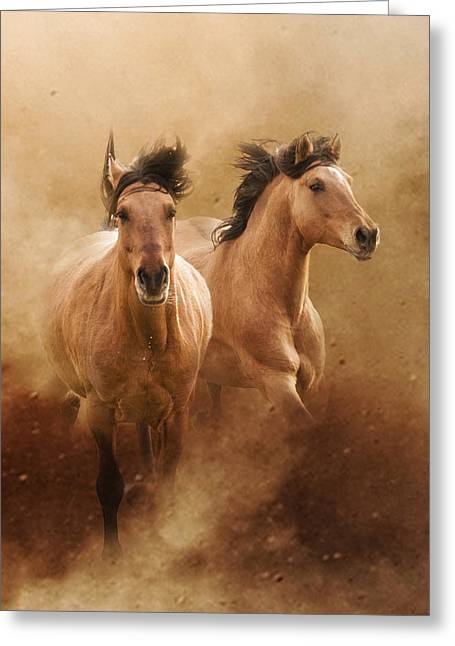 Buckskin Horse Greeting Cards - Born from Dust Greeting Card by Ron  McGinnis