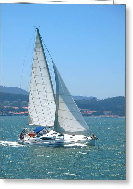 Marin County Greeting Cards - Born to Sail Greeting Card by Connie Fox