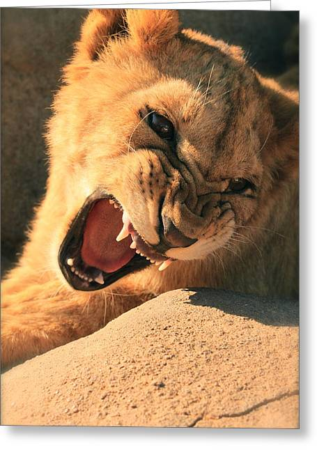 Growling Greeting Cards - Born Tough Greeting Card by Adele Oakley