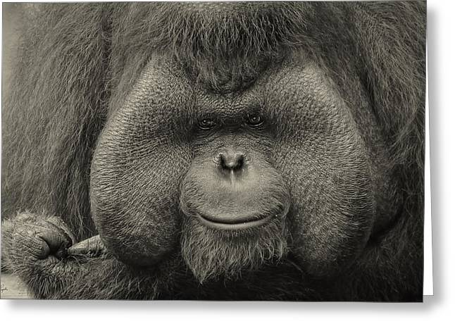 Ape Photographs Greeting Cards - Bornean Orangutan II Greeting Card by Lourry Legarde