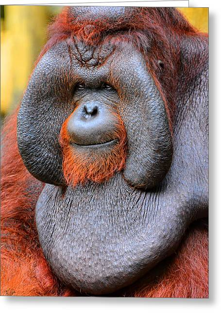 Primates Greeting Cards - Bornean Orangutan IV Greeting Card by Lourry Legarde