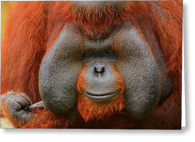 Orangutans Greeting Cards - Bornean Orangutan Greeting Card by Lourry Legarde