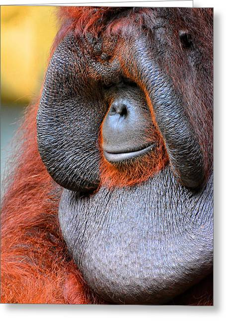 Orangutans Greeting Cards - Bornean Orangutan VI Greeting Card by Lourry Legarde