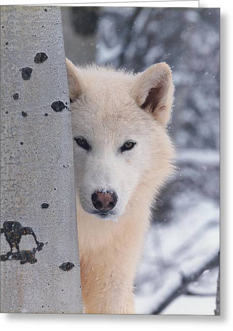 Recently Sold -  - Dogs In Snow. Greeting Cards - Borrowed Eyes Greeting Card by Paul Eubanks