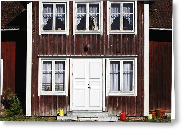 Sight Hound Greeting Cards - Borzoi Dog In The Window Of Old House Greeting Card by Christian Lagereek
