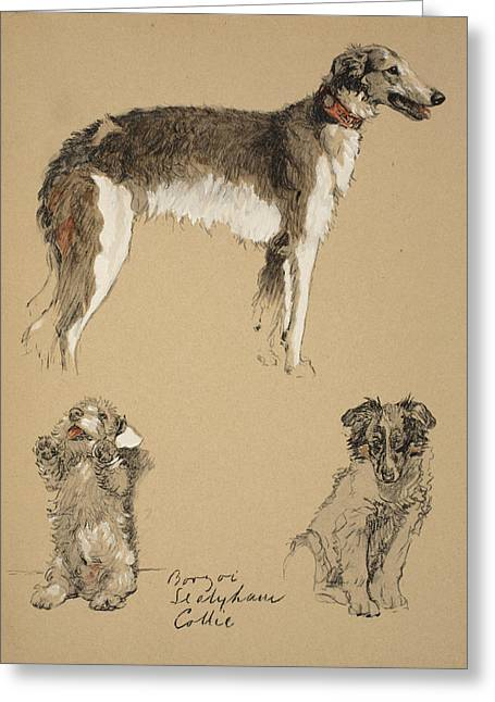 Borzoi, Sealyham And Collie, 1930 Greeting Card by Cecil Charles Windsor Aldin