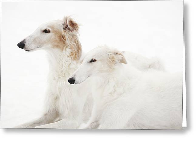 Sight Hound Greeting Cards - Borzoi Sight Hounds Greeting Card by Christian Lagereek
