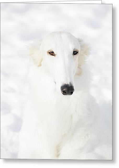 Sight Hound Greeting Cards - Borzoi White Lightning Greeting Card by Christian Lagereek
