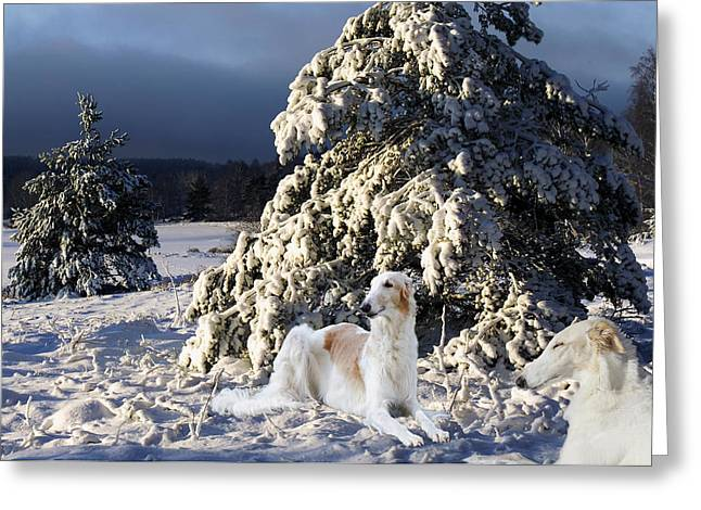 Sight Hound Greeting Cards - Borzoier Russian Hounds In A Winter Landscape Greeting Card by Christian Lagereek