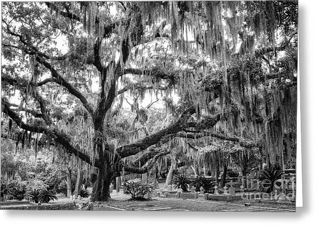 Bosque Bello Oak Greeting Card by Dawna  Moore Photography