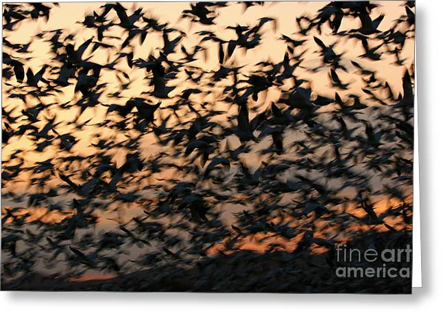Flying Animal Greeting Cards - Bosque Sunrise Blastoff Greeting Card by John Tsumas