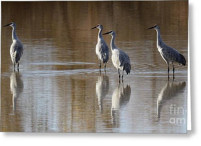 Crane Migration Greeting Cards - Bosque Del Apache Cranes Greeting Card by Bob Christopher