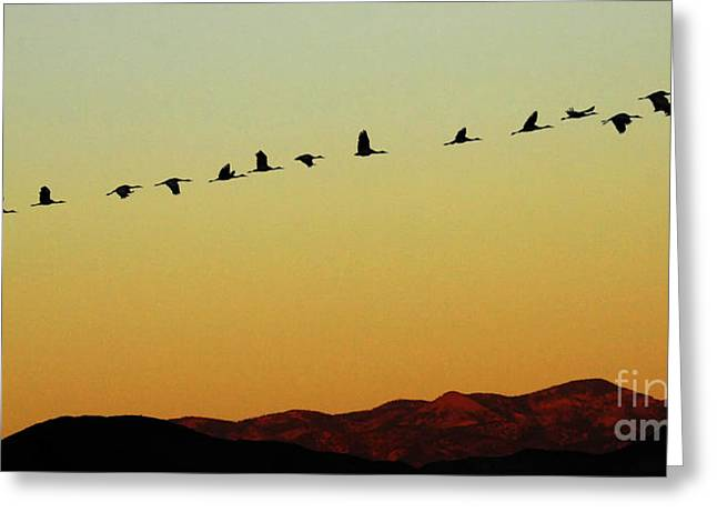 Crane Migration Greeting Cards - Bosque Del Apache Cranes In Flight 1 Greeting Card by Bob Christopher