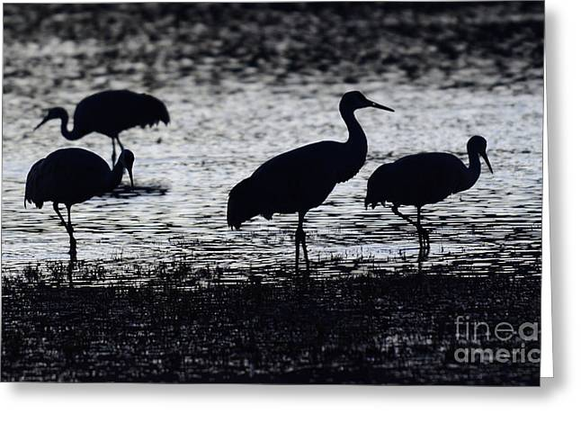 Crane Migration Greeting Cards - Bosque Del Apache Into The Dreamtime 1 Greeting Card by Bob Christopher