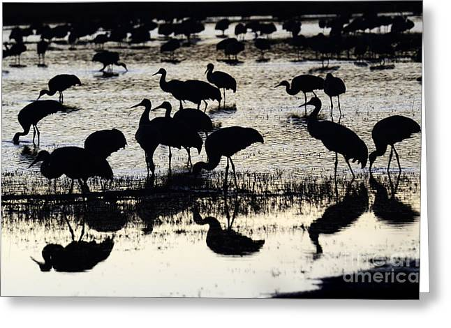 Crane Migration Greeting Cards - Bosque Del Apache Into The Dreamtime 2 Greeting Card by Bob Christopher