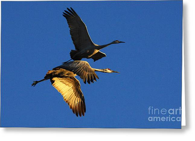 Crane Migration Greeting Cards - Bosque Del Apache Partners In Flight Greeting Card by Bob Christopher