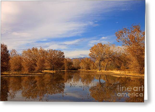 Bosque Del Apache Reflections Greeting Card by Mike  Dawson