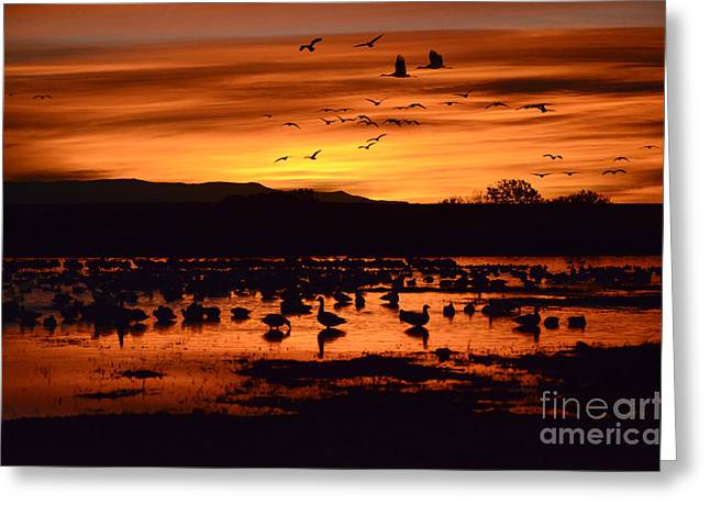 Snow Geese In Flight Greeting Cards - Bosque Del Apache Sunrise 1 Greeting Card by Bob Christopher