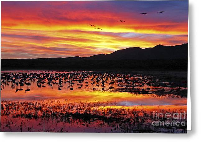Bosque Sunset II Greeting Card by Steven Ralser